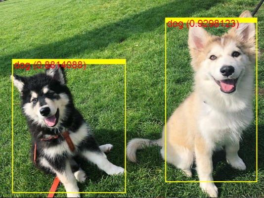 ML.NET detected two dogs in the photo, using ONNX